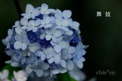 瀬戸神社-288
