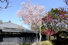 北鎌倉-242