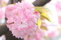 石川町~イタリア山庭園-192