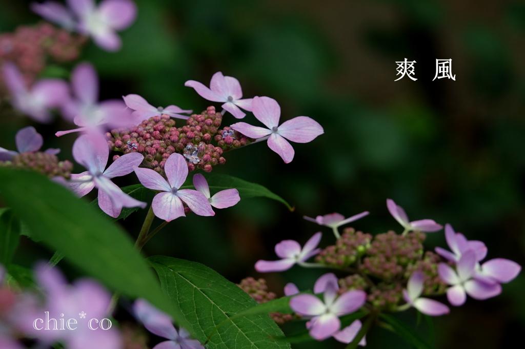 瀬戸神社-260