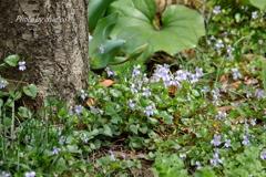 山下公園の花たち-005