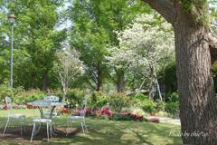 石川町~イタリア山庭園-232