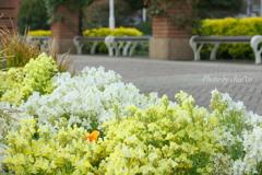 山下公園の花たち-009