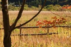 箱根湿生花園-243