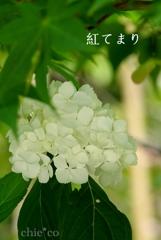 瀬戸神社-240