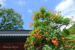 鎌倉-268