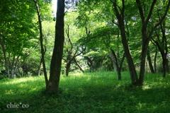 久良岐公園-213