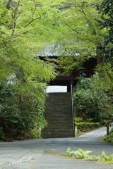 鎌倉-315
