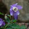 箱根湿生花園-257