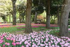 横浜公園-299