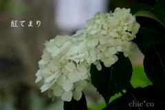 瀬戸神社-238