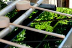 緑を映す手水舎。。~瀬戸神社~