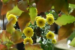 花と器のハーモニー2019-371