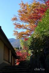 箱根美術館-164