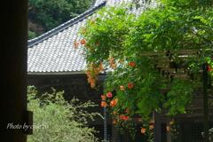 鎌倉-271