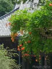 鎌倉-292