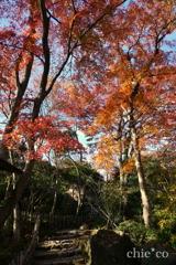 強羅公園-093