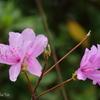 山下公園の花たち-003