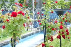 イタリア山庭園-156