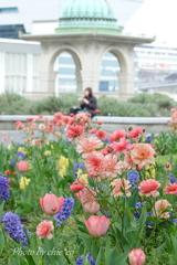 山下公園の花たち