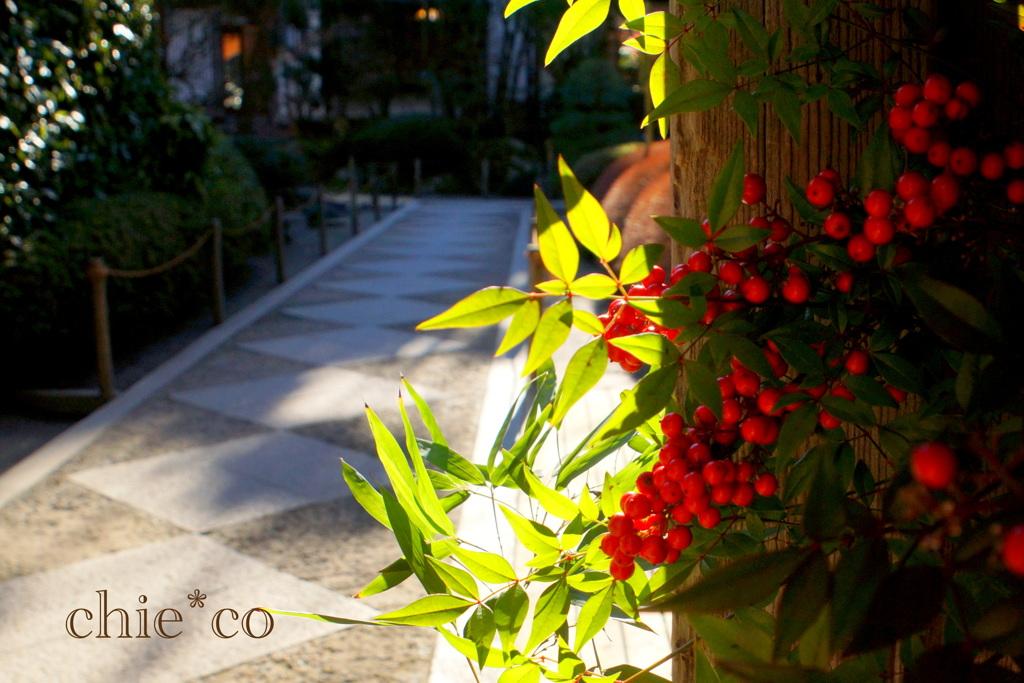 初春の鎌倉-244