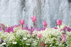 山下公園の花たち-011