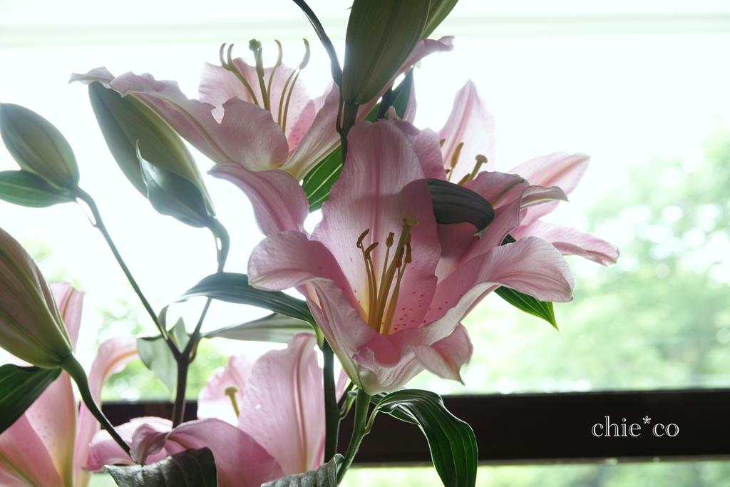 花と器のハーモニー2019-324