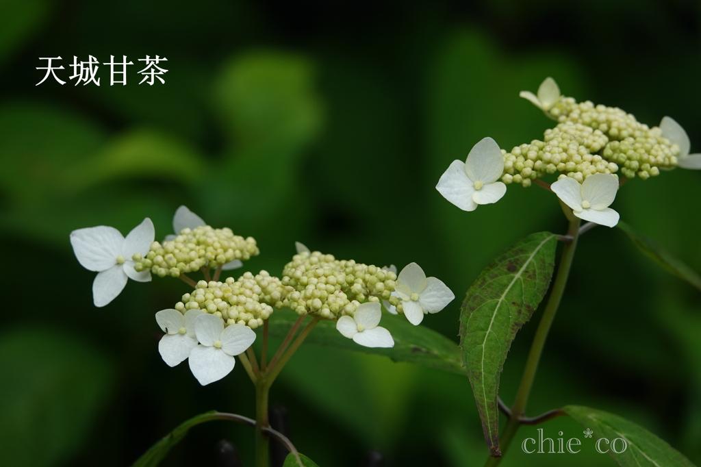 瀬戸神社-242