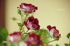花と器のハーモニー2019-375