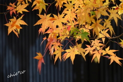 鎌倉瑞泉寺。。-105