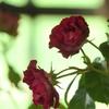 花と器のハーモニー2019-376