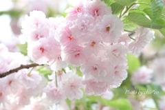 石川町~イタリア山庭園-185