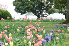 山下公園の花たち-002