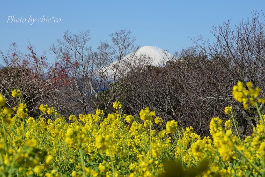 吾妻山公園-149