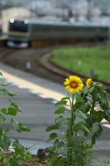 真鶴駅ホーム