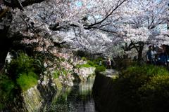 花びらの川