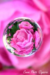 薔薇の木の下で
