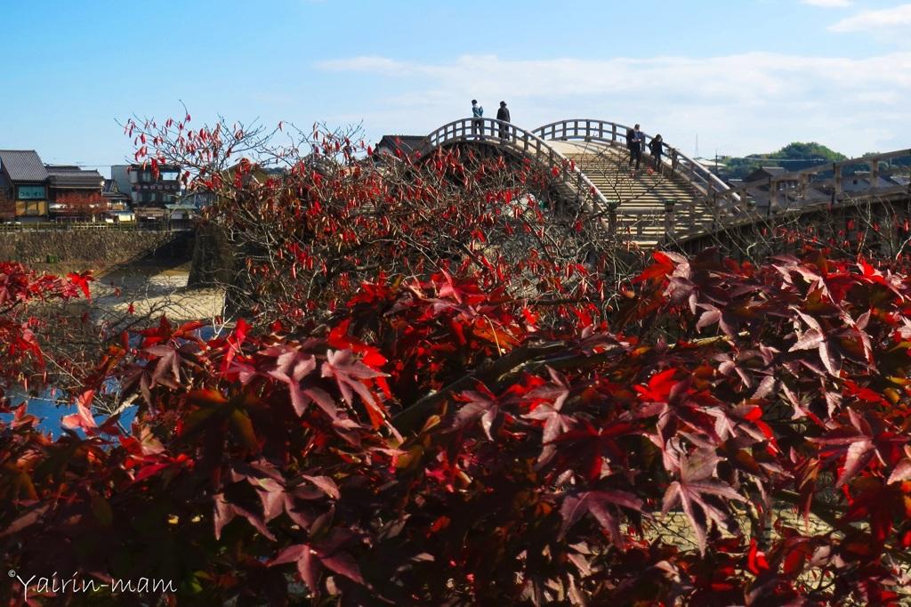 秋の錦帯橋