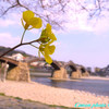 春の錦帯橋