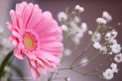 花をあなたに