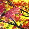 京都の紅葉Ⅲ