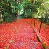 紅葉と階段Ⅱ