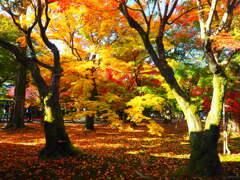 そうだ 京都、行こう。Ⅱ