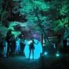 下鴨神社 糺の森 緑