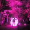 下鴨神社 糺の森 紫