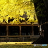新宮熊野神社 長床の大銀杏