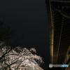 般若院と枝垂れ桜