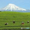 大淵笹場 あっぱれ富士山