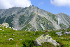 ライチョウと立山