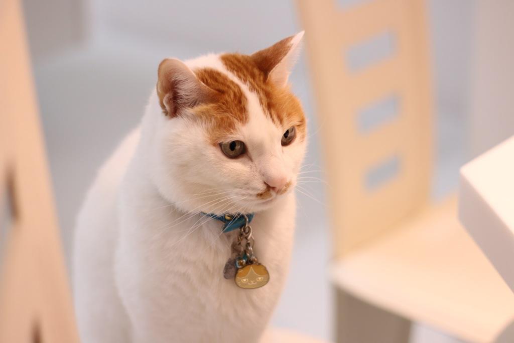 【EF50mm f1.8 STM レンズテスト】愛猫